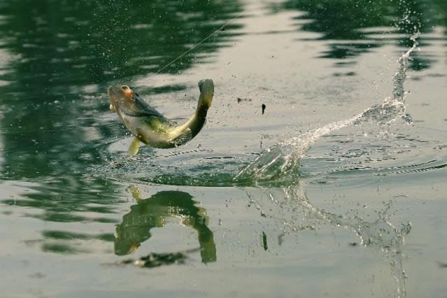 ember és hal küzdelme