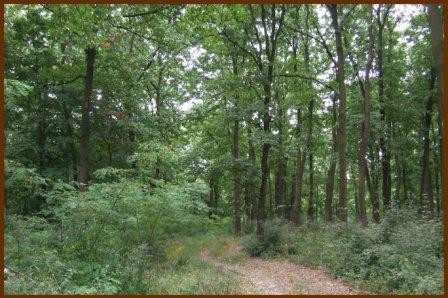 Közeli erdő